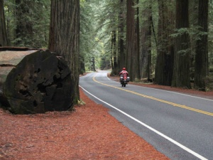 redwoods_th